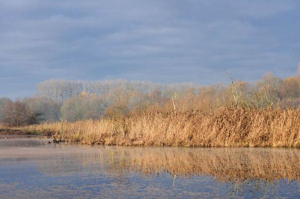 Teich mit Schilfrohr (Phragmites australis) im Winter, Nordrhein-Westfalen / ch196951