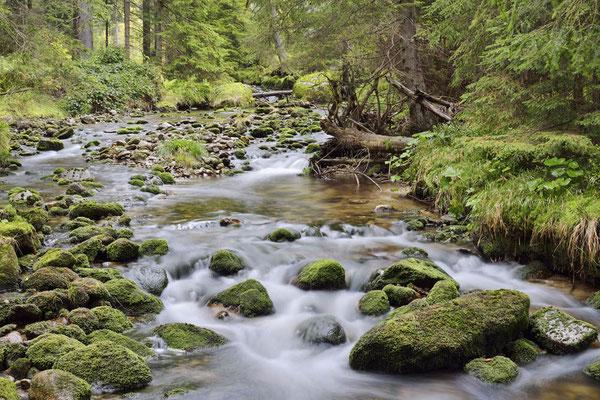 Bergbach im Herbst, Nationalpark Bayerischer Wald,  Bayern / ch168845