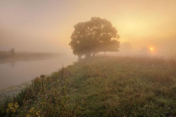 Silber-Weide (Salix alba) an der Lippe, Nordrhein-Westfalen / chhd0027