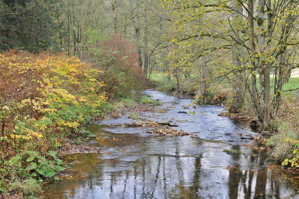 Flusslauf im Herbst, Sächsische Schweiz, Sachsen / ch193746
