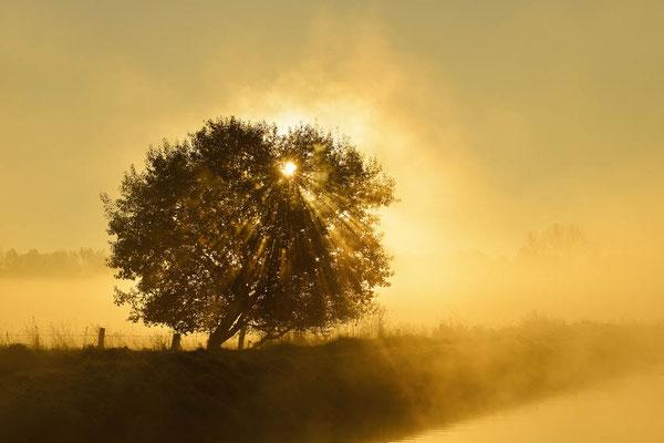 Baum bei Sonnenaufgang mit Nebel, Nordrhein-Westfalen / ch165321a