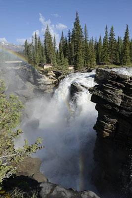 Athabasca Falls / ch157541