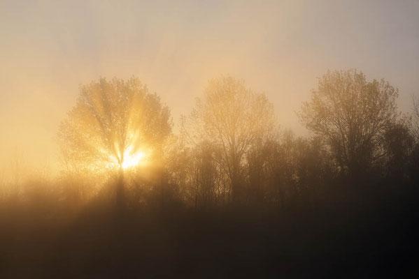 Laubbäume im Morgennebel mit Sonnenstrahlen, Nordrhein-Westfalen / ch196878