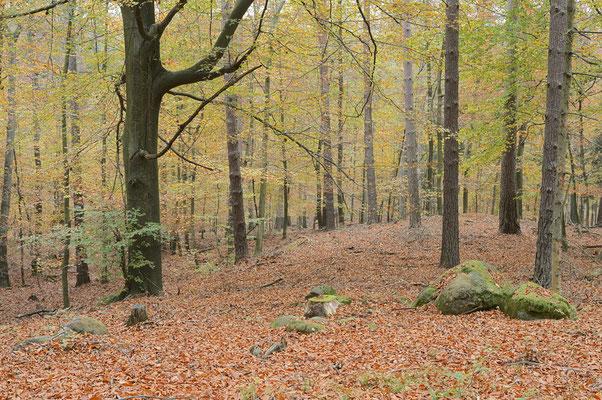 Mischwald im Herbst, Sächsische Schweiz, Sachsen / ch193519