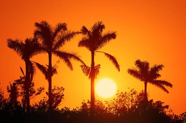 Palmen bei Sonnenuntergang / ch023530a
