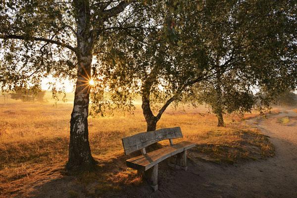 Birken in Heidelandschaft bei Sonnenaufgang / chhd0037