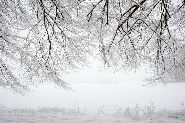 Rotbuchen (Fagus sylvatica) im Winter, Nordrhein-Westfalen / ch103929