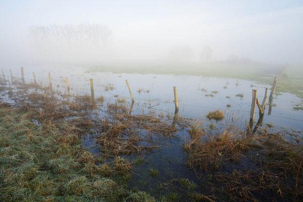 Überschwemmte Feuchtwiese im Morgennebel, Nordrhein-Westfalen / ch195560