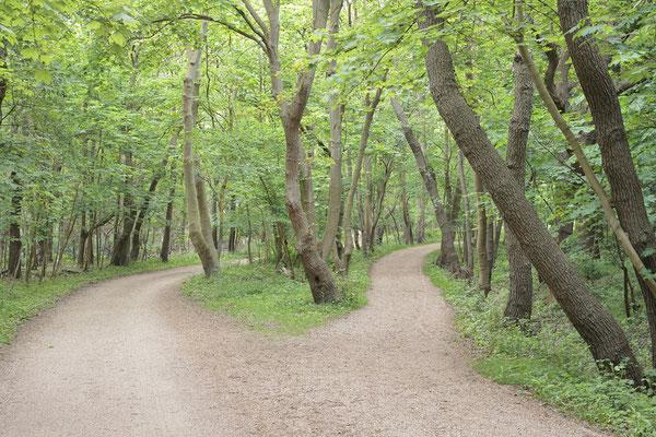 Wanderwege im Laubwald, Niederlande / ch189021