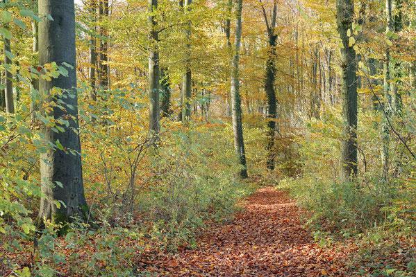 Wanderweg im Laubwald im Herbst, Nordrhein-Westfalen / ch196869
