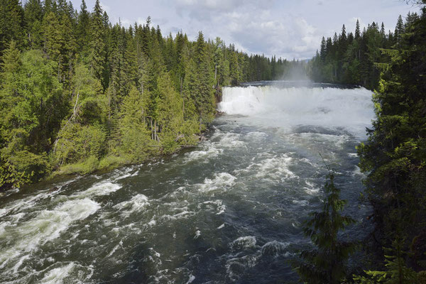 Dawson Falls / ch156801
