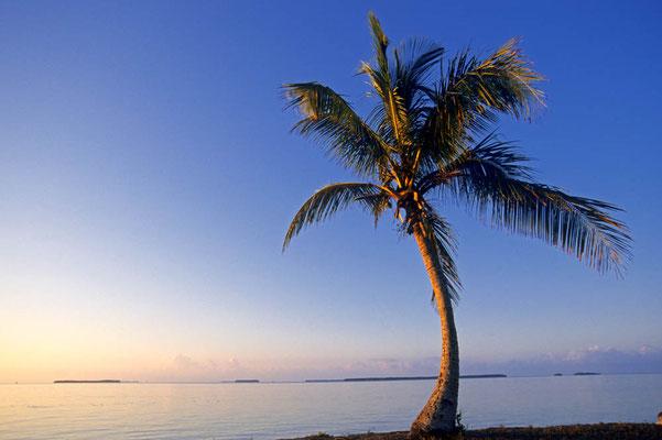 Kokospalme bei Sonnenaufgang (Cocos nucifera) / chs05004