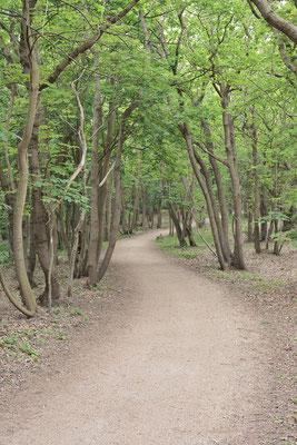 Wanderweg im Laubwald, Niederlande / ch189027