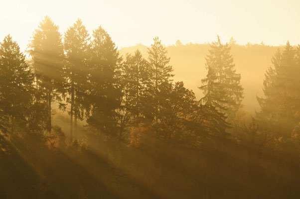 Bäume im Morgennebel mit Sonnenstrahlen, Nordrhein-Westfalen / ch165413
