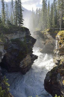 Athabasca Falls / ch157581
