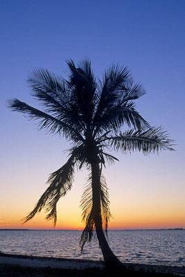 Kokospalme bei Sonnenuntergang (Cocos nucifera) / chs04999