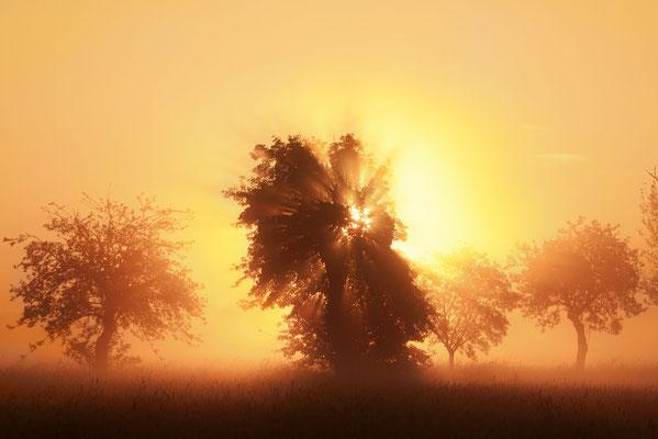 Obstbäume bei Sonnenaufgang, Nordrhein-Westfalen / ch192123