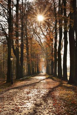 Allee mit Rotbuchen im Herbst, Nordrhein-Westfalen / ch185333