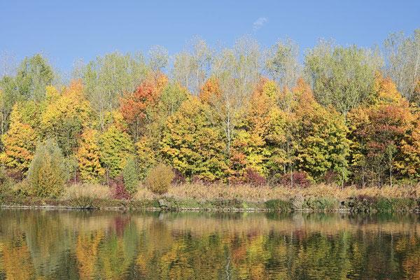 Laubbäume an einem See im Herbst, Nordrhein-Westfalen / ch185322