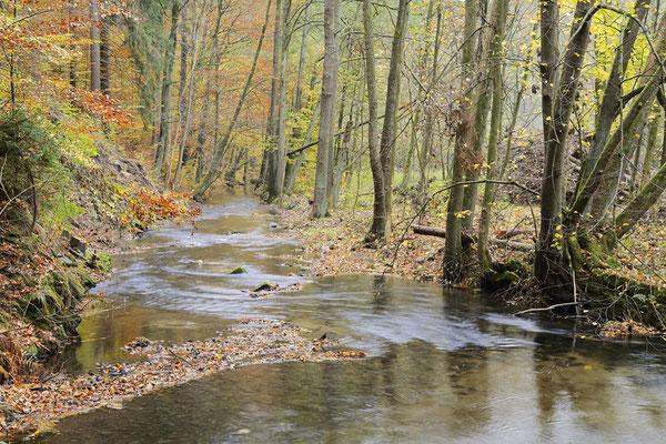 Flusslauf im Herbst, Sächsische Schweiz, Sachsen / ch193730