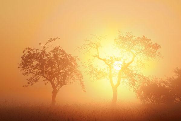 Obstbäume bei Sonnenaufgang, Nordrhein-Westfalen / ch192121