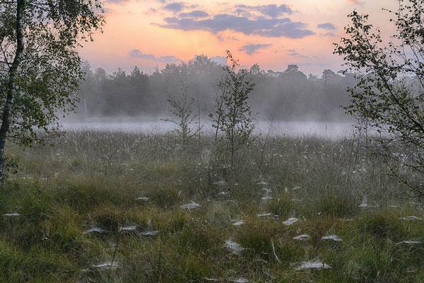 Moorsee in der Morgendämmerung, Nordrhein-Westfalen / ch00100h