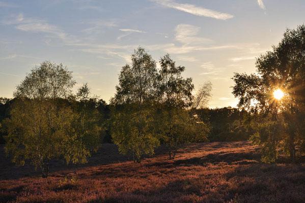 Blühende Heidelandschaft bei Sonnenuntergang / ch168371