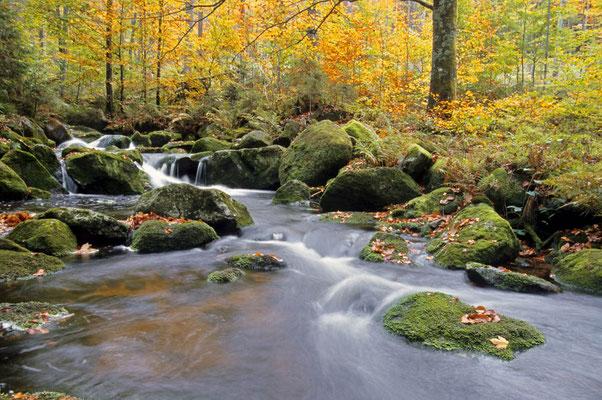 Bergbach im Herbst, Nationalpark Bayerischer Wald,  Bayern / chs02407