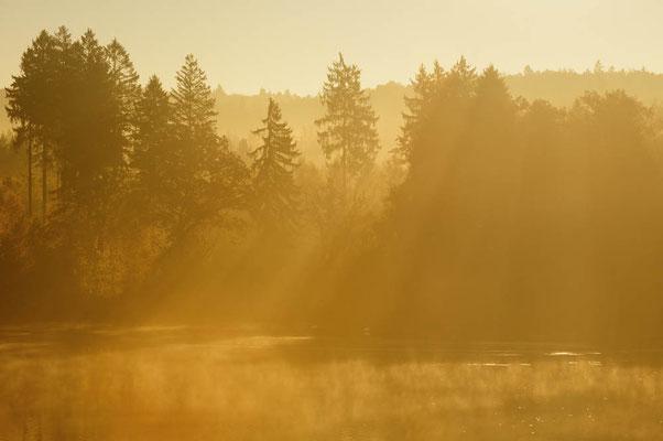 Bäume im Morgennebel mit Sonnenstrahlen, Nordrhein-Westfalen / ch165427