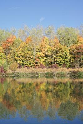 Laubbäume an einem See im Herbst, Nordrhein-Westfalen / ch185327
