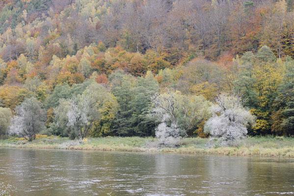 Elbe und Mischwald im Herbst, Sächsische Schweiz, Sachsen / ch193541