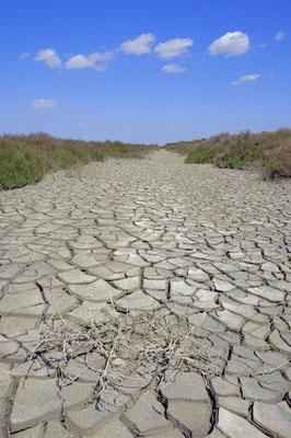 Ausgetrocknete Erde, Camargue, Frankreich / ch050155
