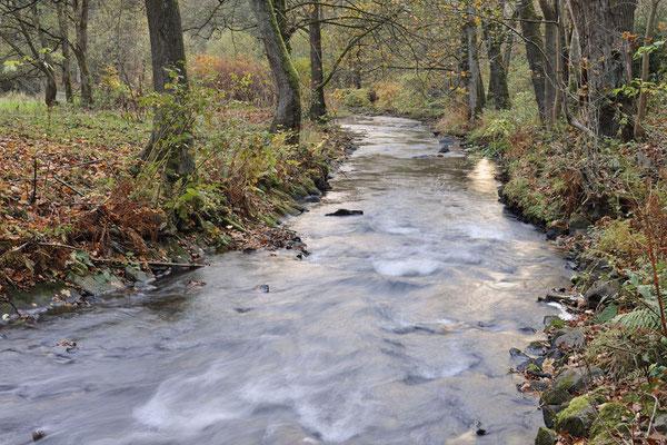 Flusslauf im Herbst, Sächsische Schweiz, Sachsen / ch193749