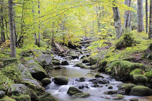 Bergbach im Herbst, Nationalpark Bayerischer Wald,  Bayern / ch168863
