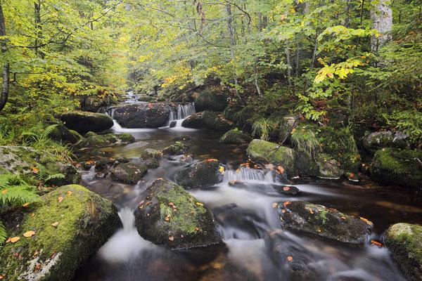 Bergbach im Herbst, Nationalpark Bayerischer Wald,  Bayern / ch168870