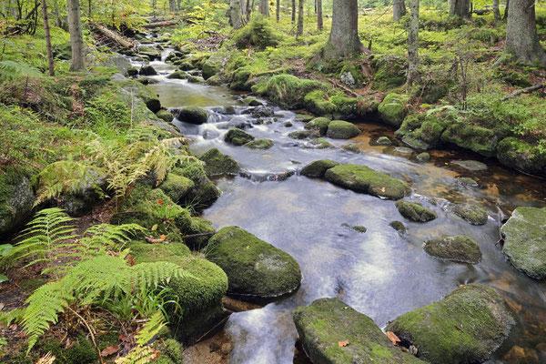 Bergbach im Herbst, Nationalpark Bayerischer Wald,  Bayern / ch168856