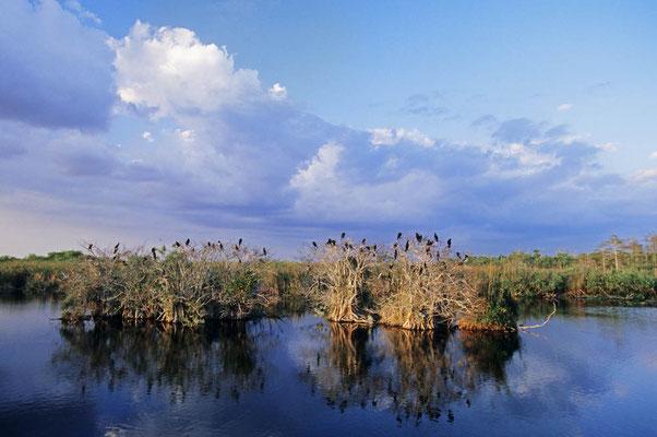 Everglades Nationalpark / chs04979