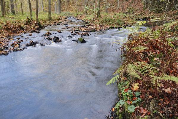 Flusslauf im Herbst, Sächsische Schweiz, Sachsen / ch193757