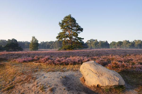Blühende Heidelandschaft / ch191317