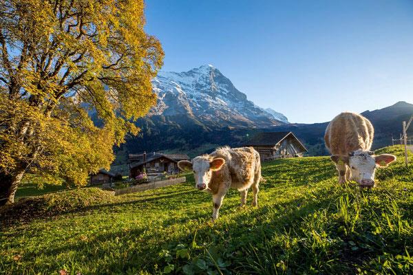 E-Mountainbike Tour Jungfrau Loop
