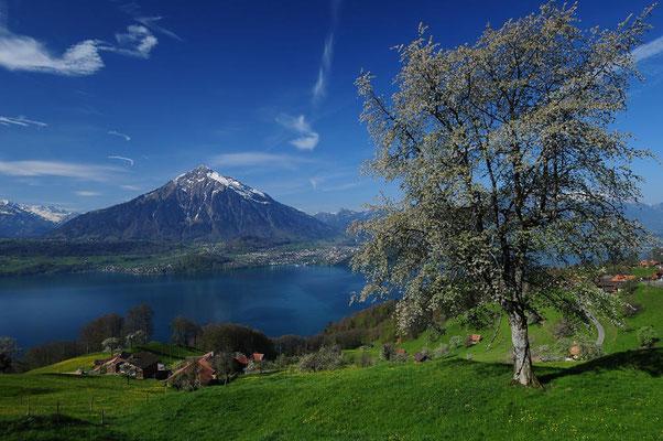 Wanderreise mit Gepäcktransport im Berner Oberland: Thunersee