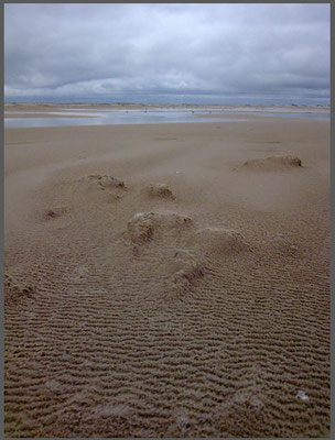 Strand auf Amrum 2011