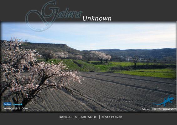 Bancales labrados (2011 Galera, Granada)