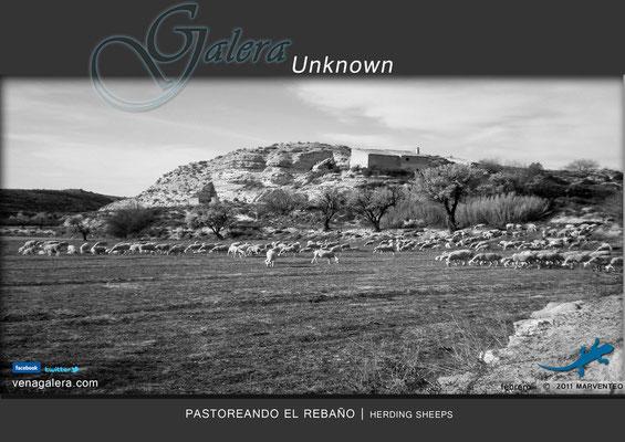 Pastoreando el rebaño (2011 Galera, Granada)