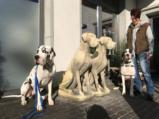 Stadttraining, mit welchen Hunden?