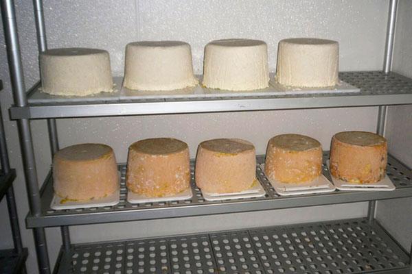 Der Käse reift im Käsekeller auf der Loosbühelalm in Großarl
