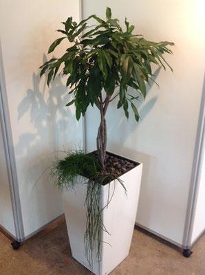 Büro- und Zimmerpflanzen