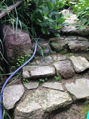 現場から出た石で階段を石積み