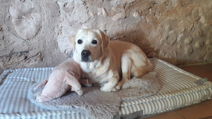 Casper aus Mallorca :-)