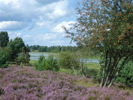 Tangersdorfer Heide August 2017.
